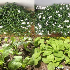 Basic Composting IV: Effects of Composting in our Garden