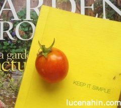 How to start a Small Vegetable Garden in Lucena City